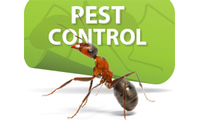 $129 HealthyHome™ Initial Pest Protection...