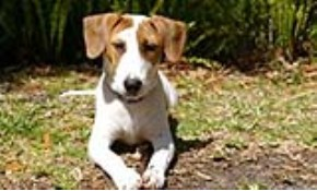 $275 for $325 Credit Toward Any Dog Training...