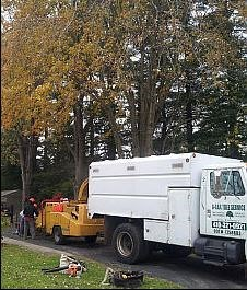 a aaa tree service white marsh md 21162 angies list. Black Bedroom Furniture Sets. Home Design Ideas