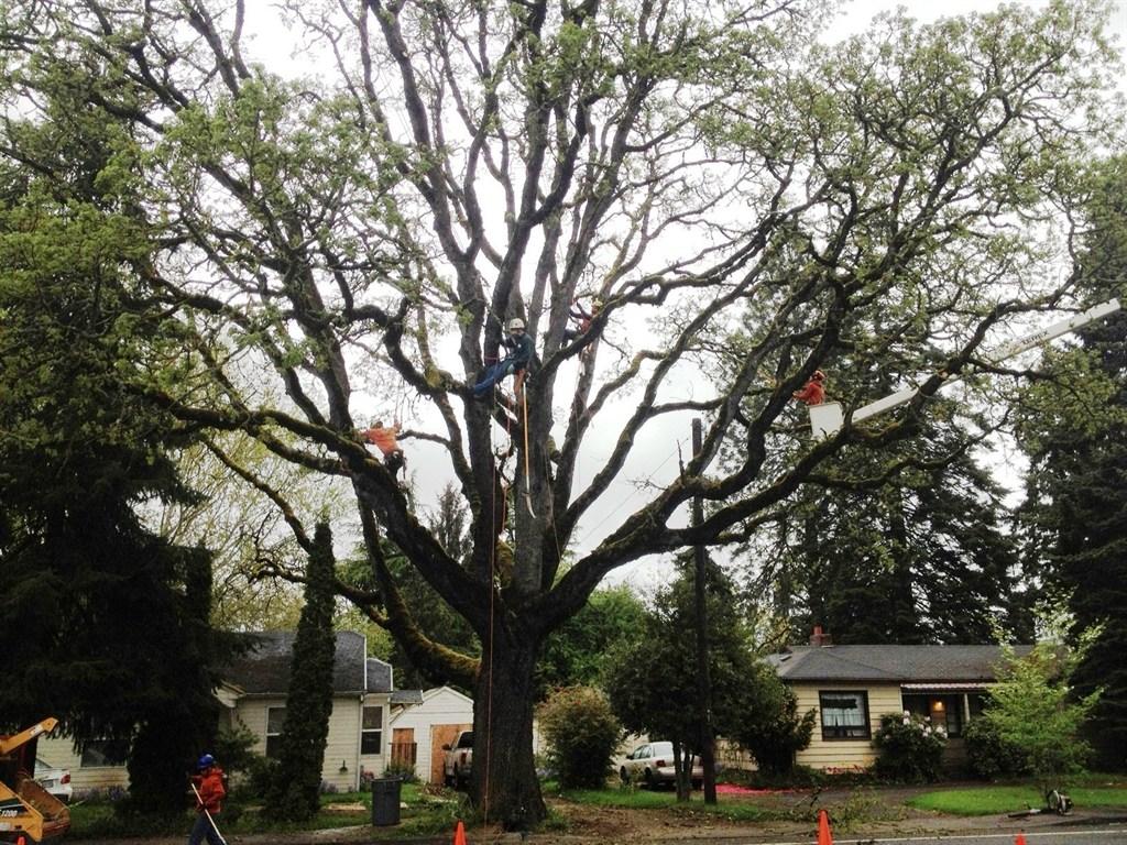 Expert tree pruning
