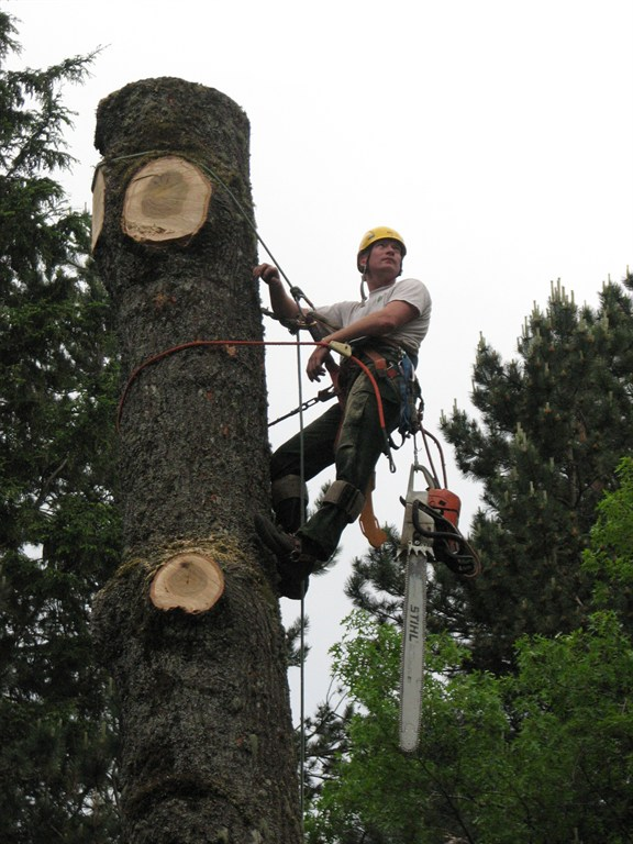 Skilled tree removal