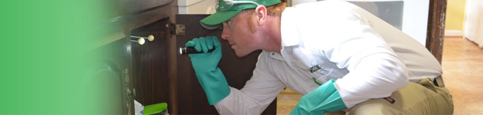 moxie pest control of arizona $ 99 for a one time pest control service ...