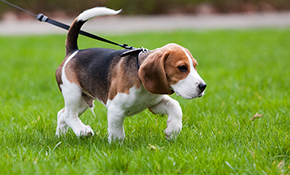41% off 10 Midday Pet Walks--New Clients...