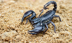 $79 for Scorpion Elimination for your Entire...