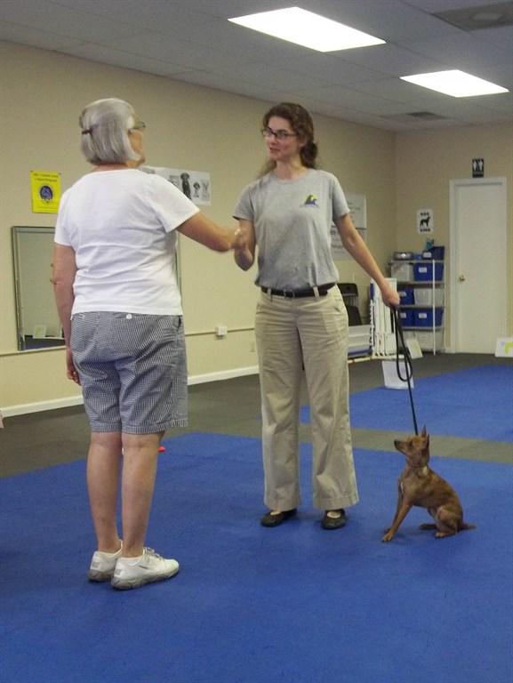 Service Dog Training Simpsonville Sc