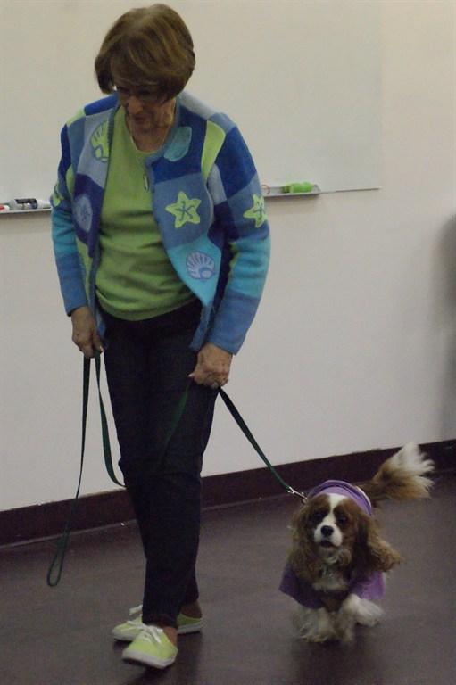 Positive Approach Dog Training Tacoma Wa