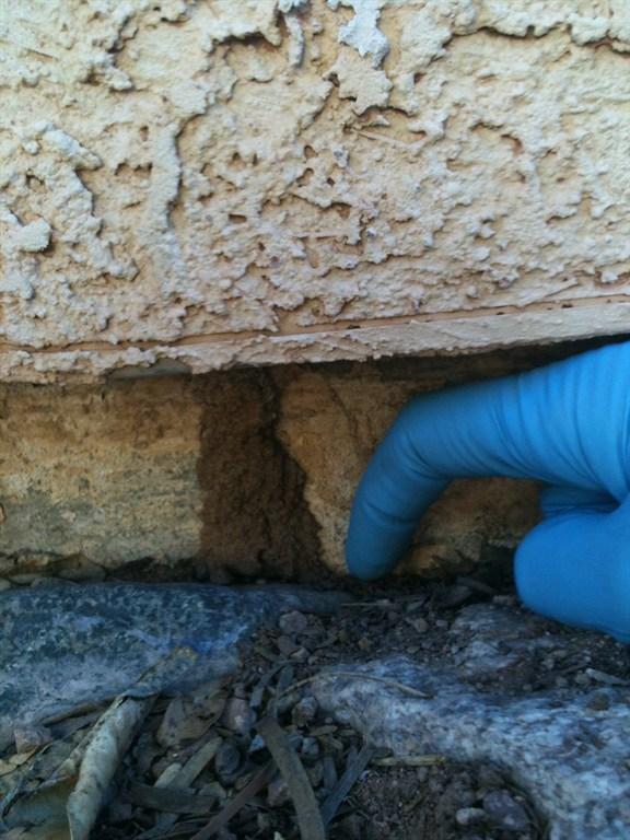 5 Star Termite Amp Pest Control Tucson Az 85710 Angies List