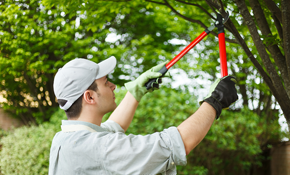 $250 for $500 Credit Toward Tree Service