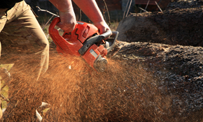 $2,599 for a Full Day of Tree Service (Four...
