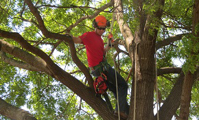 $1,799 for Full Day of Tree Service Work...
