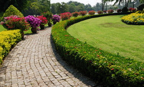 $49 for Complete Landscape Design Consultation