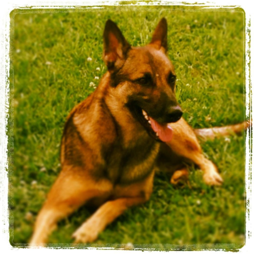Aggressive Dog Training Charlotte Nc