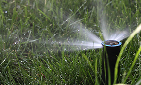 Sprinkler Winterization for $59!