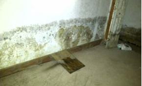 $450 for an Interior Home Mold Inspection...