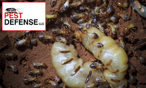 $899 for Termidor Termite Treatment, Prevention...