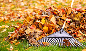 $269 for Two times of Fall Leaf Removal with...