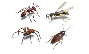 Only $25 for Initial Pest Control Treatment...