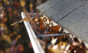 $59 for Gutter Cleaning