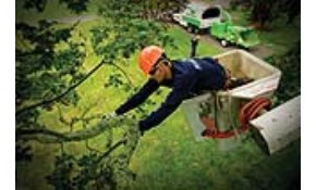 $157 for $300 of Tree Service