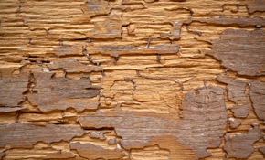 $98 for 1 Year Termite Warranty