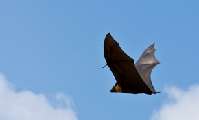 $200 for 24 Hour Bat Emergency Service