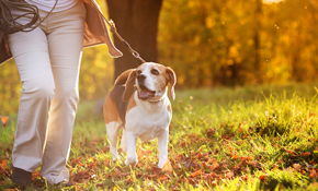 $18 for One 40 Minute Dog Walking Session