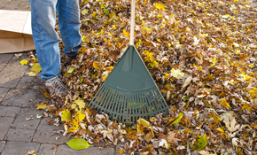 $120 for 4 Hours of Leaf Removal
