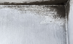 $100 for $500 Credit Toward Mold Mitigation...