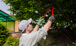 $720 for 3 Tree Service Professionals for...