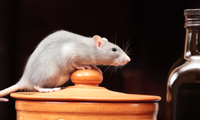 $89 for Installation of up to 8 Rodent Traps,...
