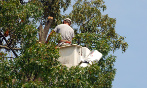 $1100 for 8 Labor-Hours of Tree Service