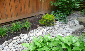 $6,295 for Drought Tolerant Landscaping Package