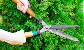 $249 for 6 Hours of Brush and Shrub Pruning