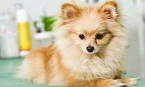 $45 for Dog Grooming of a Small Dog (Under...