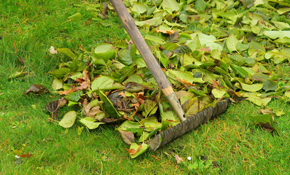$274 for 3 Hours of Landscaping or Yard Clean-up