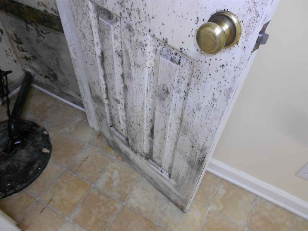 #6B604E MOLDetect (Flappan Consulting) Overland Park KS 66213  Highly Rated 829 Air Duct Cleaning Mold wallpapers with 1024x768 px on helpvideos.info - Air Conditioners, Air Coolers and more