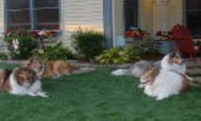 $29 for Dream Grass Installation, Consultation,...