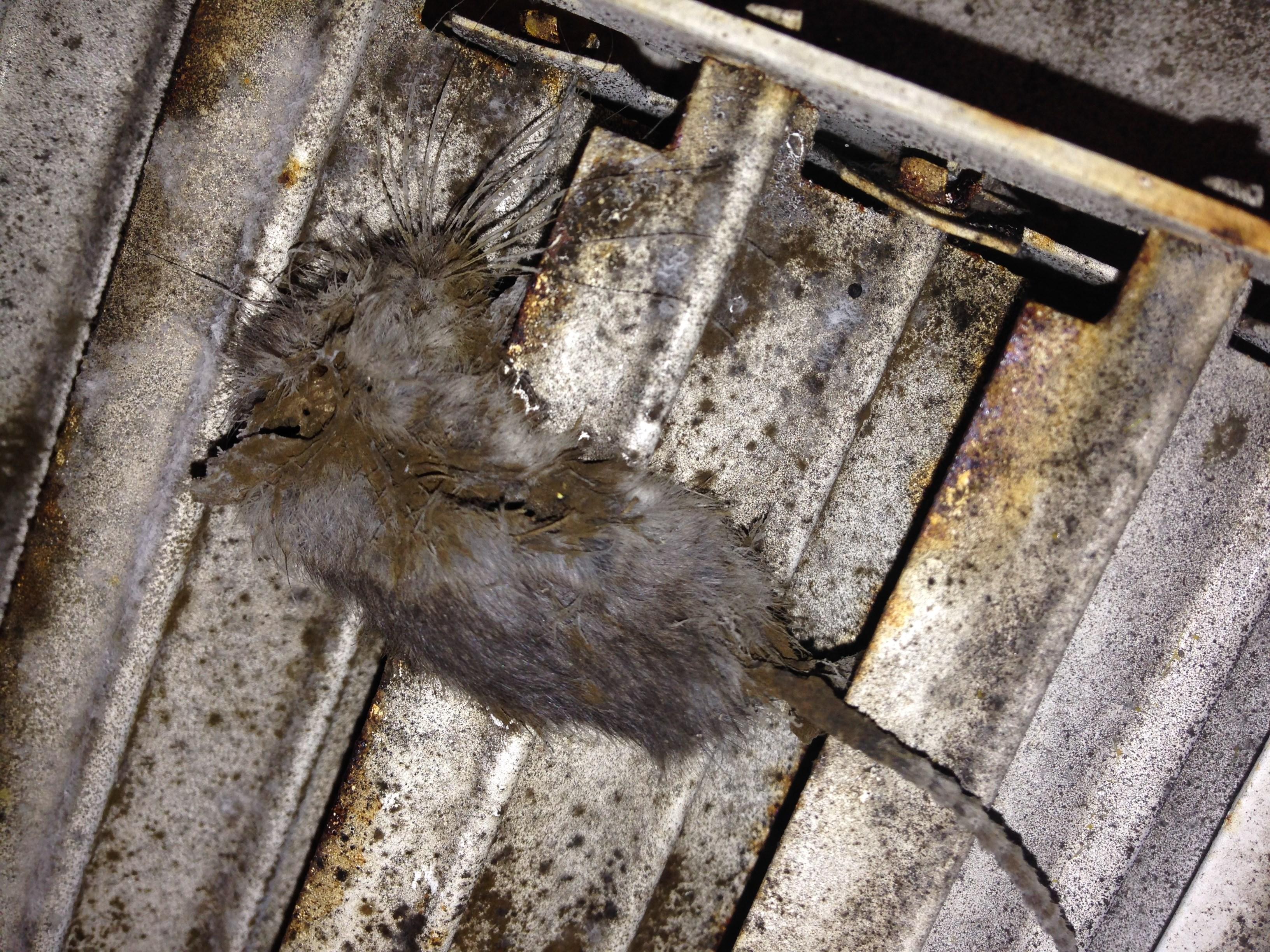 Kohmar Air Duct Cleaning Llc Richmond Va 23225