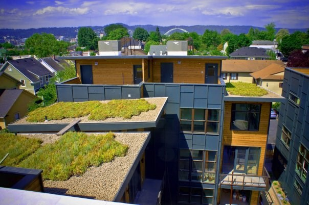 Sacramento Lofts green roof project