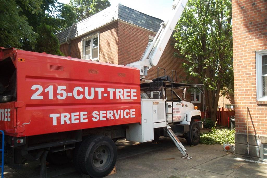215-CUT-TREE