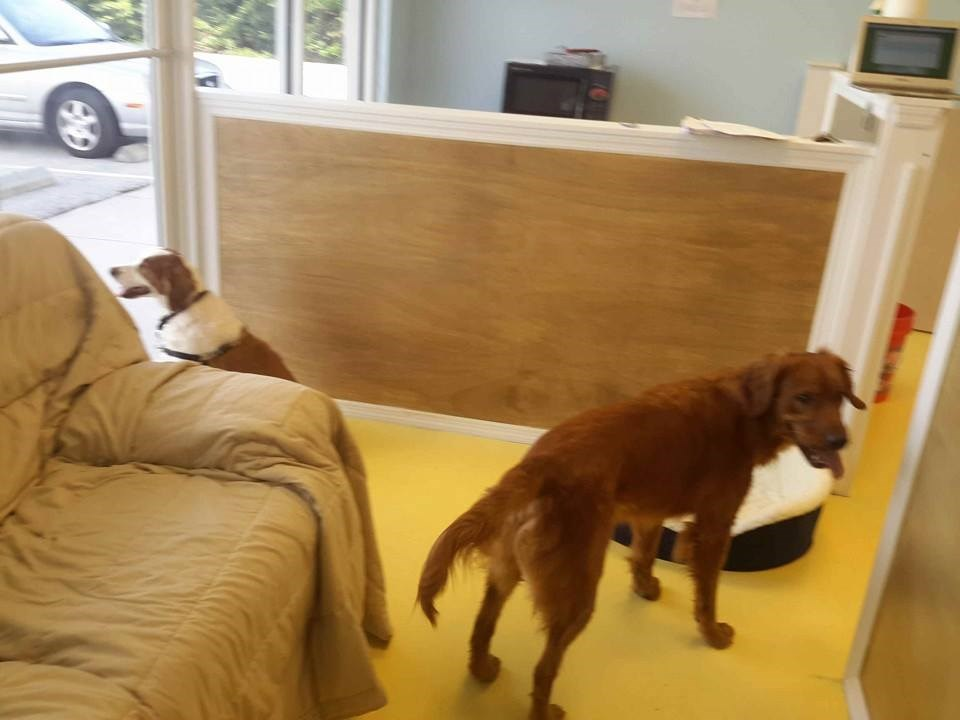 dog bed and breakfast llc 2