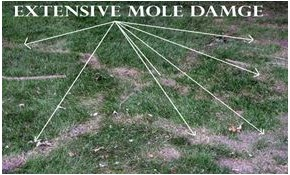 $360 for a Mole and Vole Lawn Treatment Package