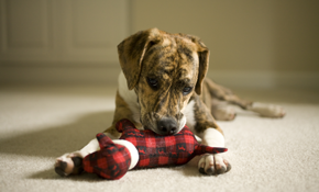 Only $100 for Carpet Cleaning & Basic Pet...