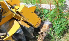 $140 for 2 Hours of Stump Grinding