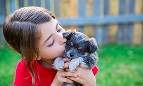 $1,245 for $1,395 for Electronic Pet Fencing
