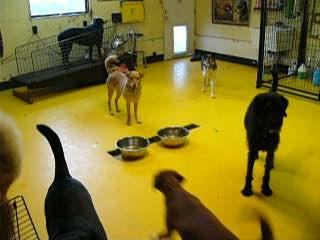 Dog Room