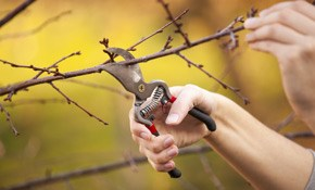 $225 for 3 Hours of Tree Service for Trees/Shrubs...