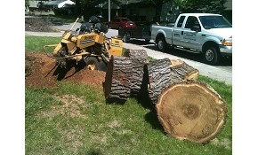 $100 Stump Removal Service