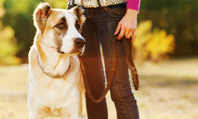 $216 for 1 Month of Dog Walking (2 Days a...