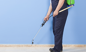 $249 for an Annual Pest Control Package